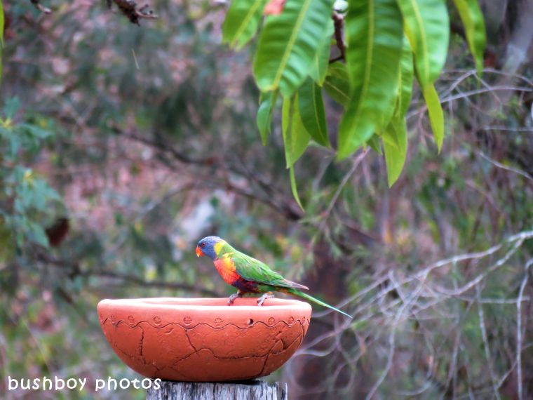 180329_blog challenge_quartet_rainbow lorikeets6