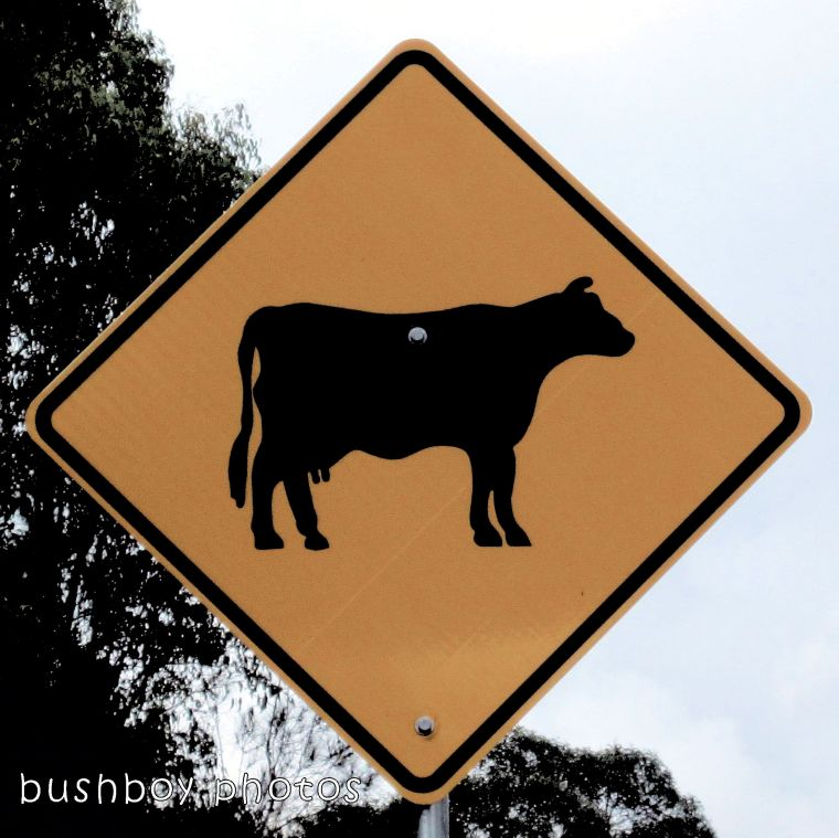road signs_cow