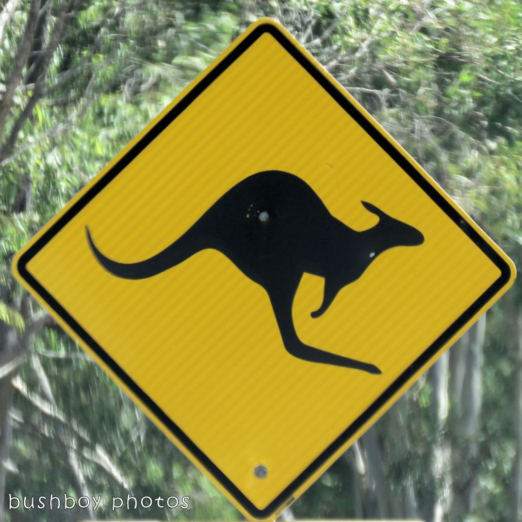 road signs_kangaroo