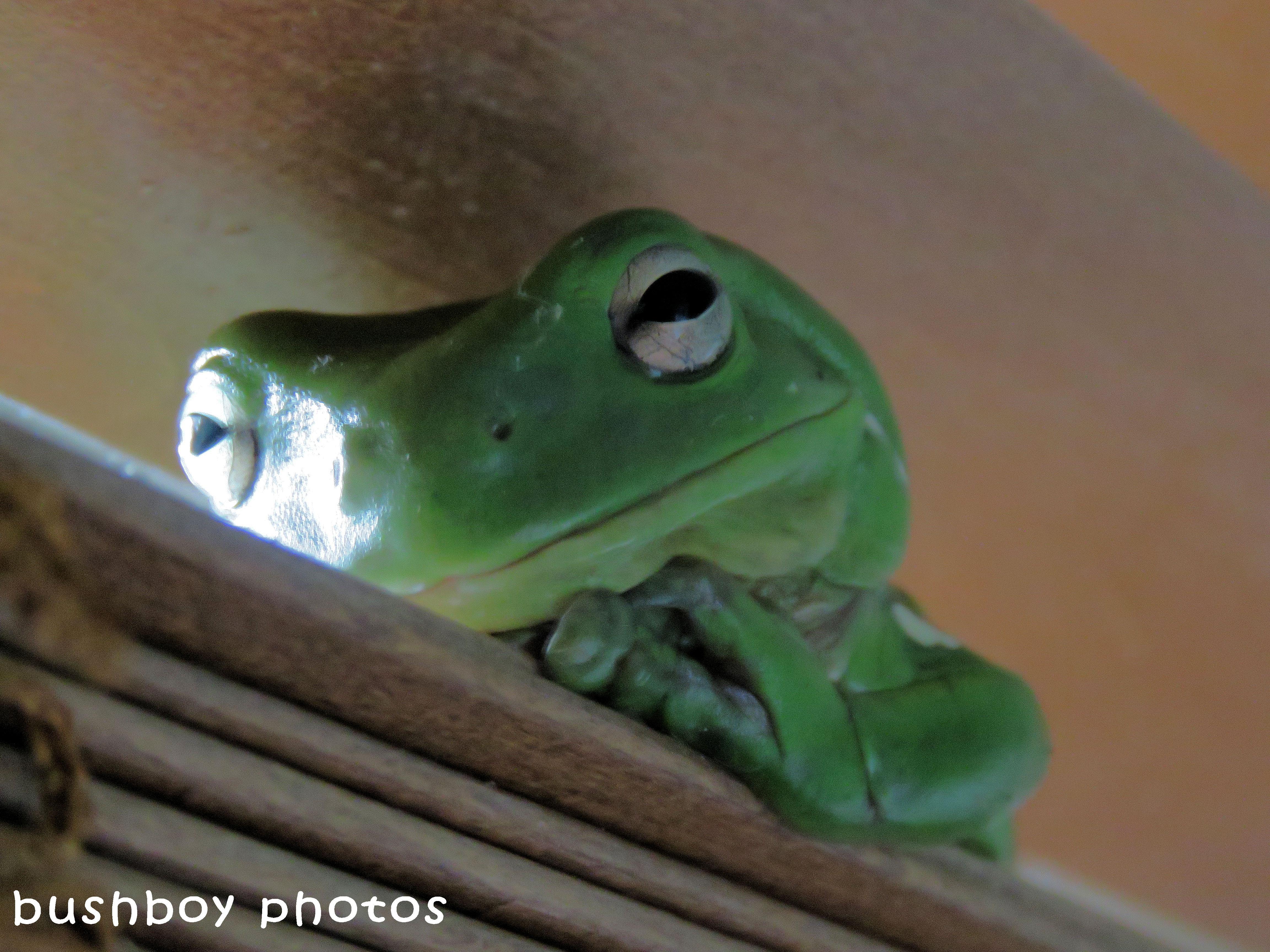 180405_blog challenge_smile_frog