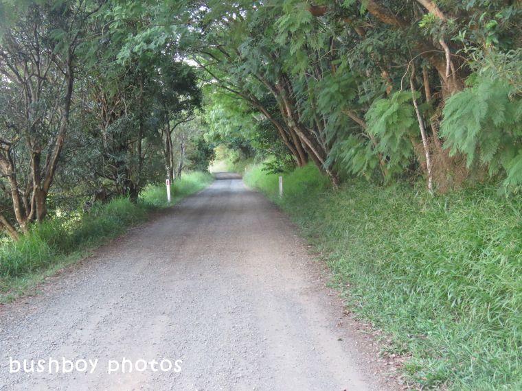 180414_blog challenge_which way_flowers rddown