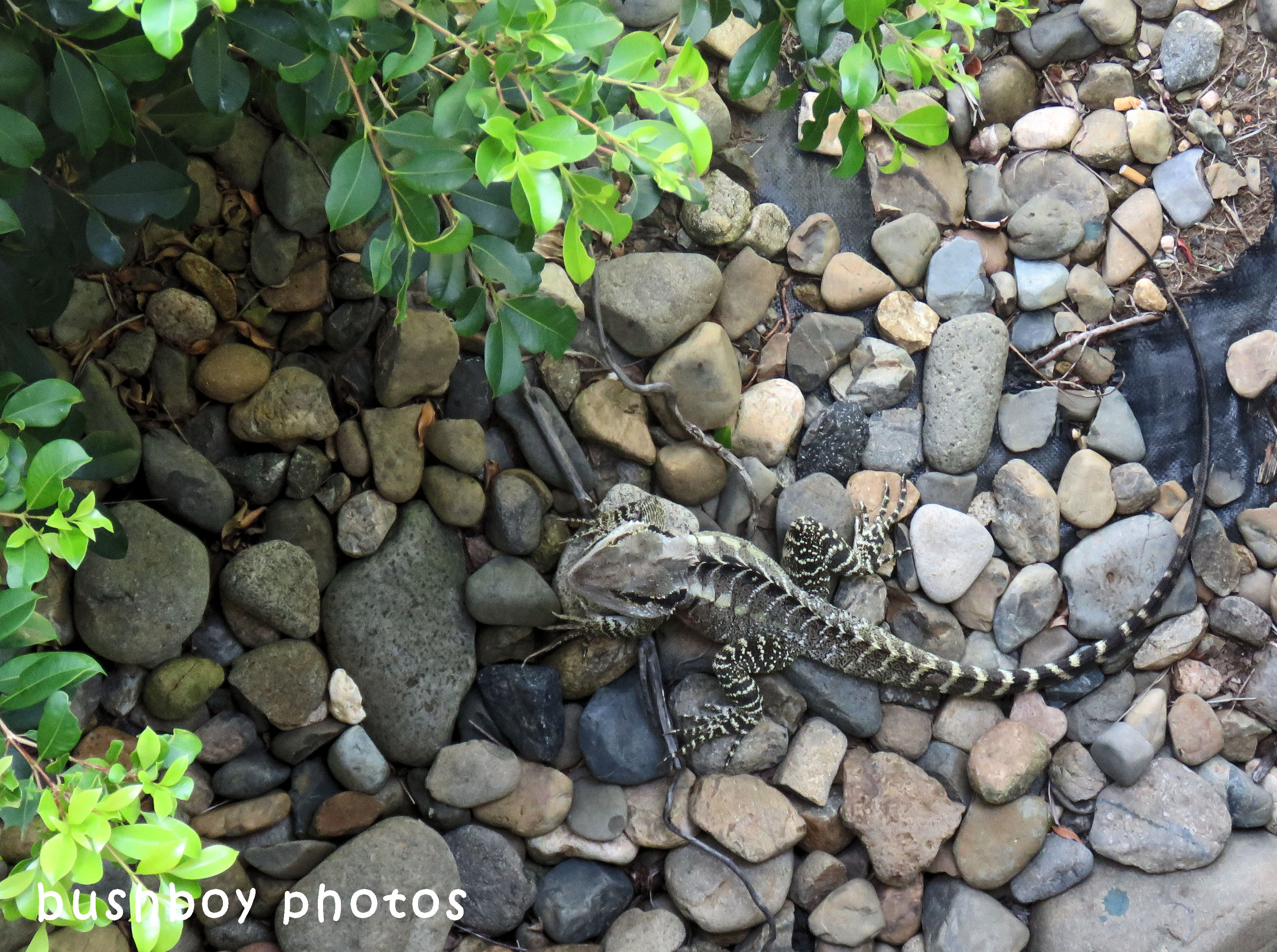 180418_blog challenge_free and easy_water dragon1