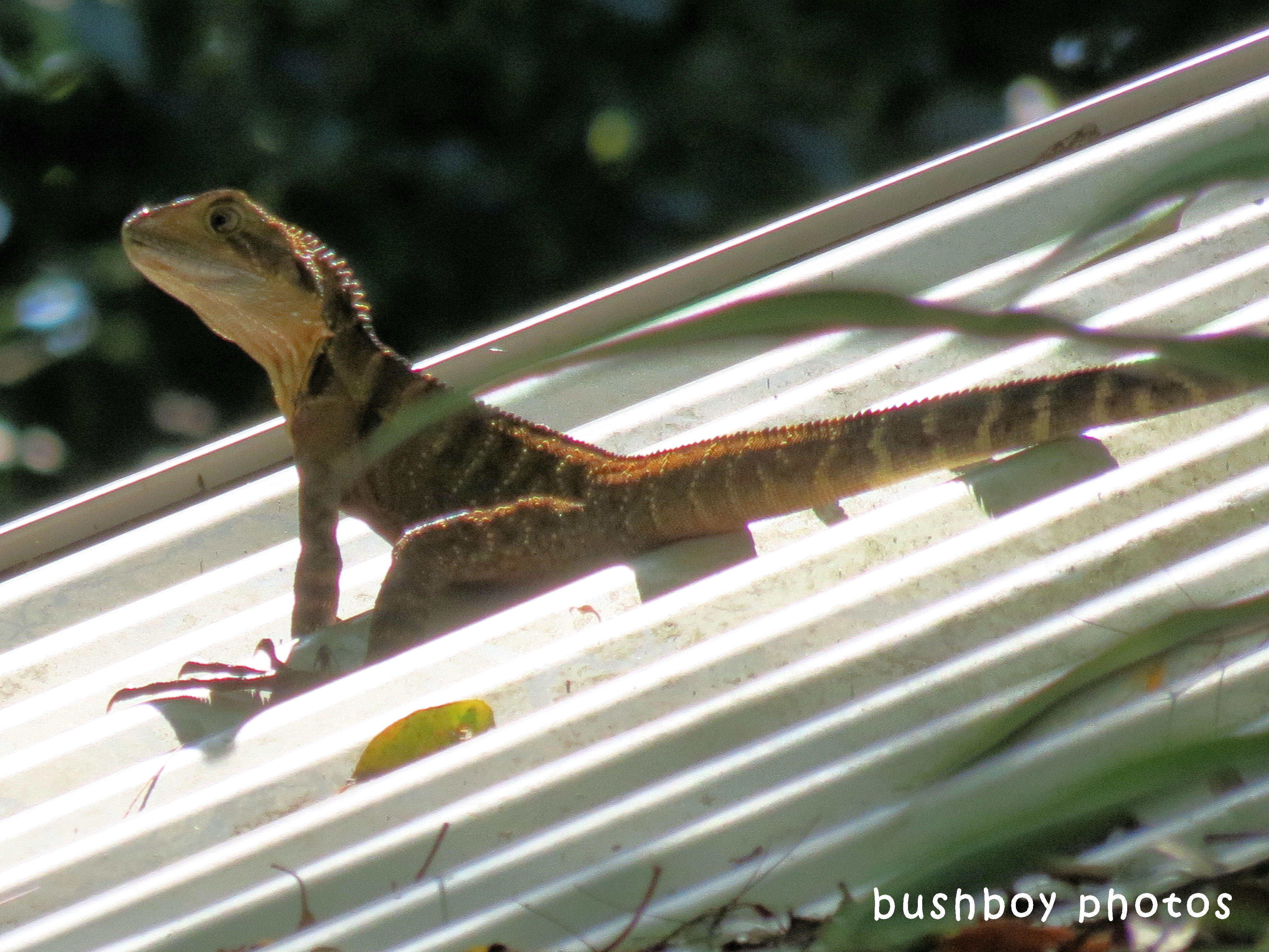 180418_blog challenge_free and easy_water dragon2