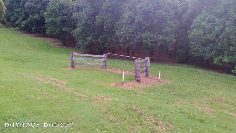 180425_odd ball_gate