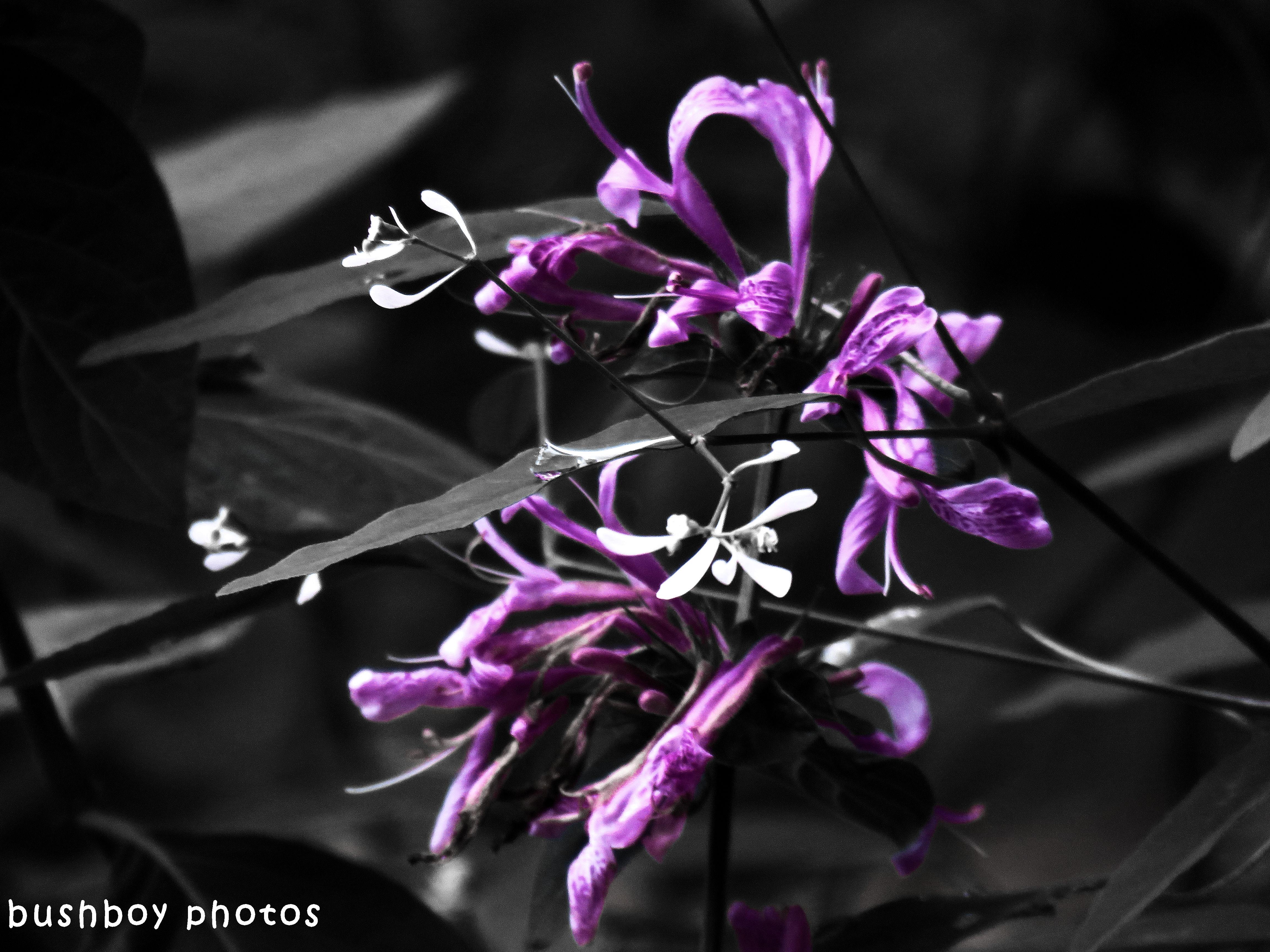 180427_blog challenge_blackandwhite_two differnt things_flowers