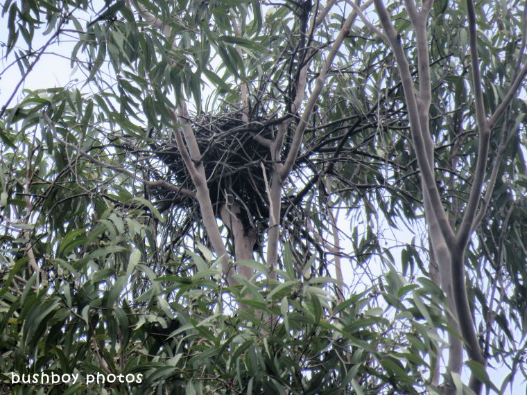 kites nest_named_home_march 2018
