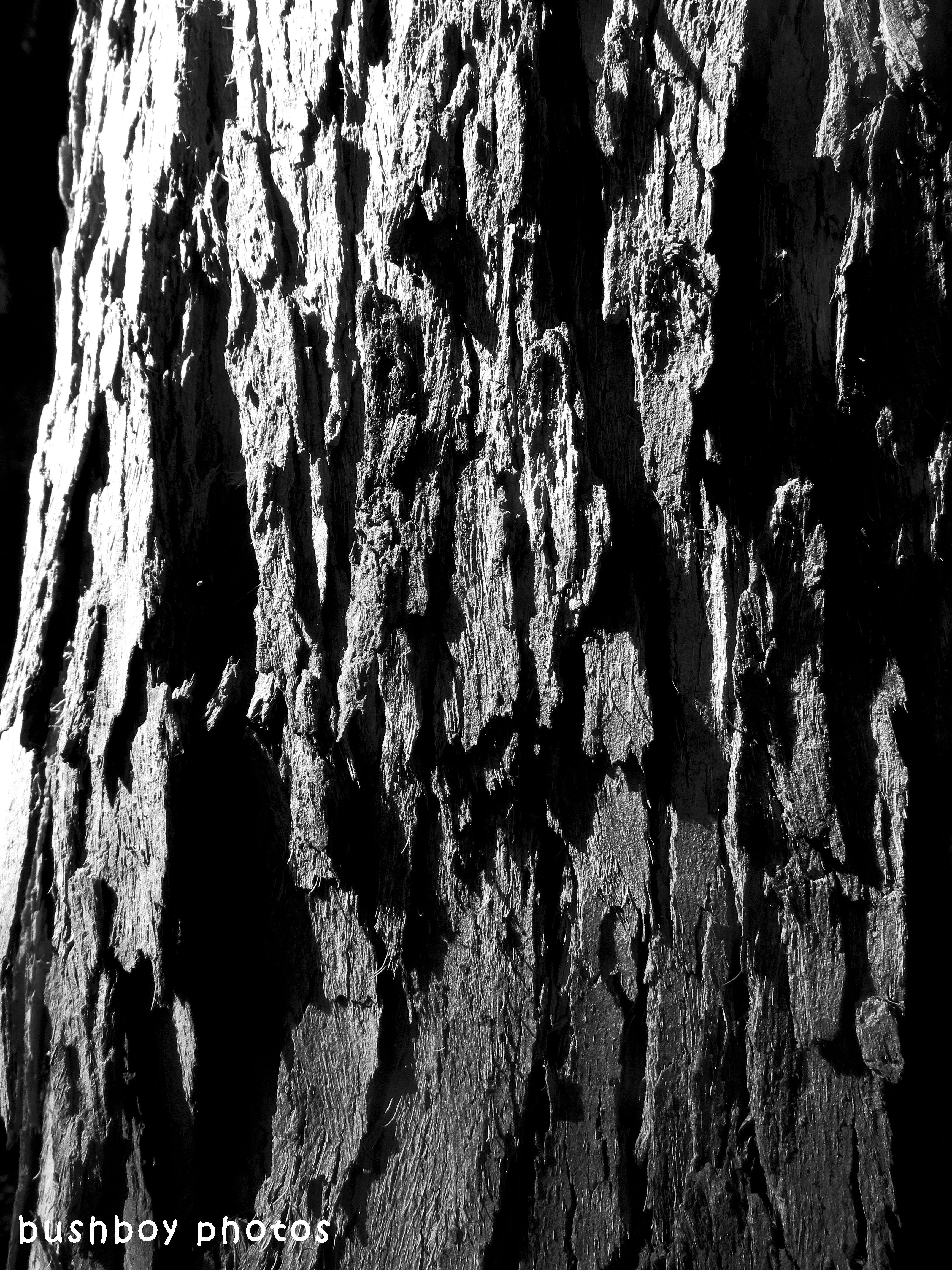 shape_texture_tree bark1_named_april 2018