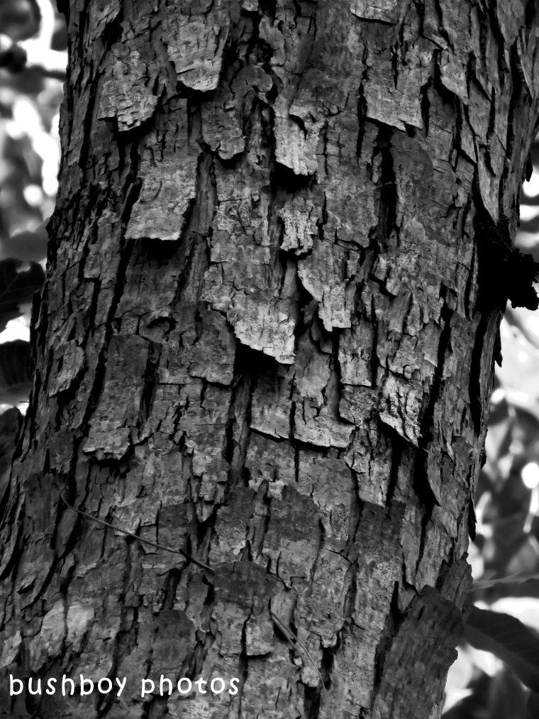 shape_texture_tree bark2_named_april 2018