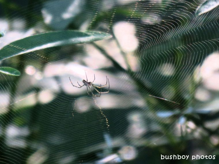 spider_web_upsidedown_named_binna burra_march 2018