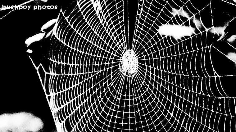spiders web_blackandwhite_named_binna burra_march 2018