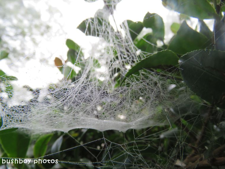 spiders web_messy_named_binna burra_march 2018