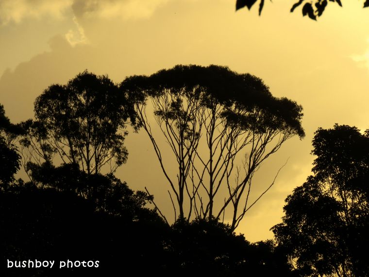 yellow sky_trees_named_binna burra_march 2018