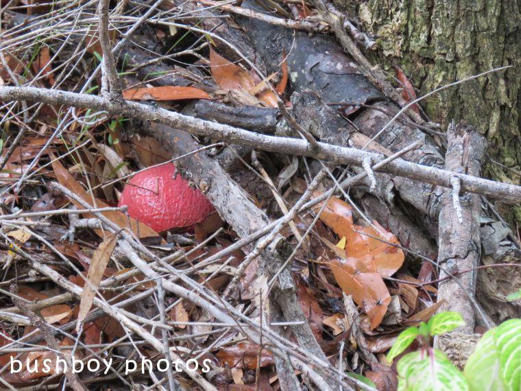 180504_odd ball_red ball