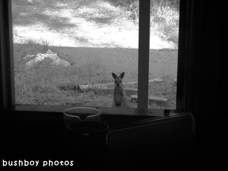 180511_blog challenge_blackandwhite_through a window_home