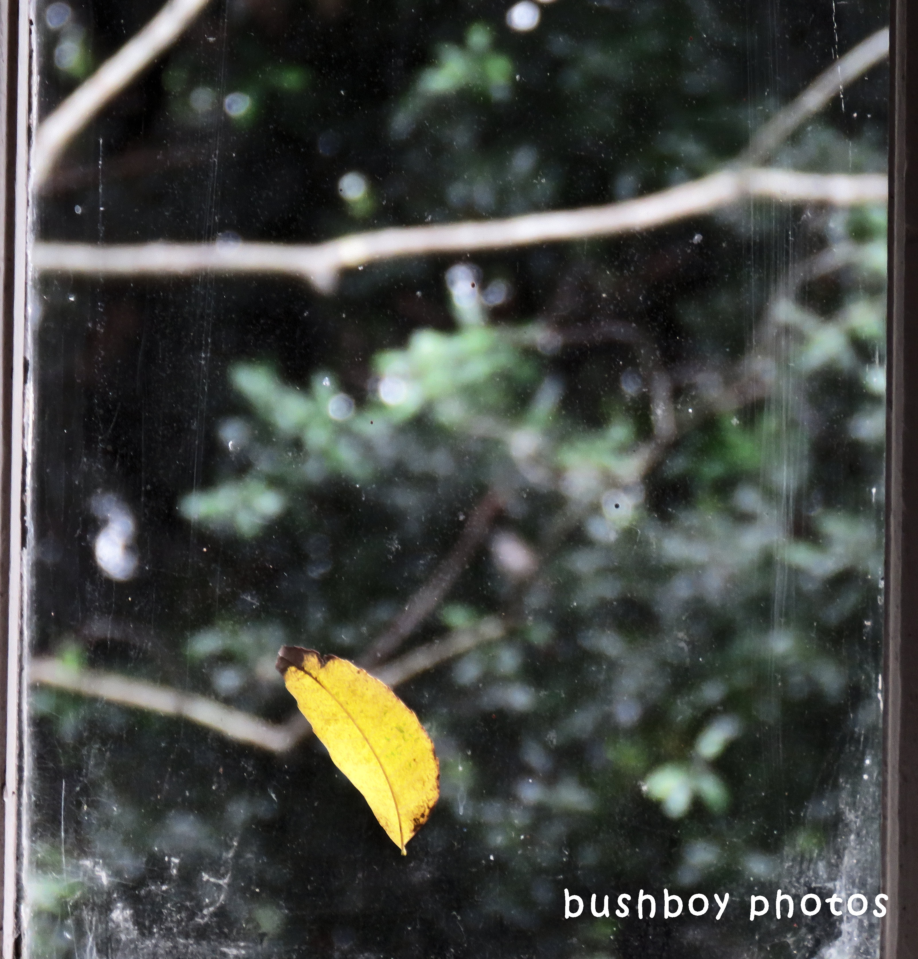 180522_odd ball_window_leaf
