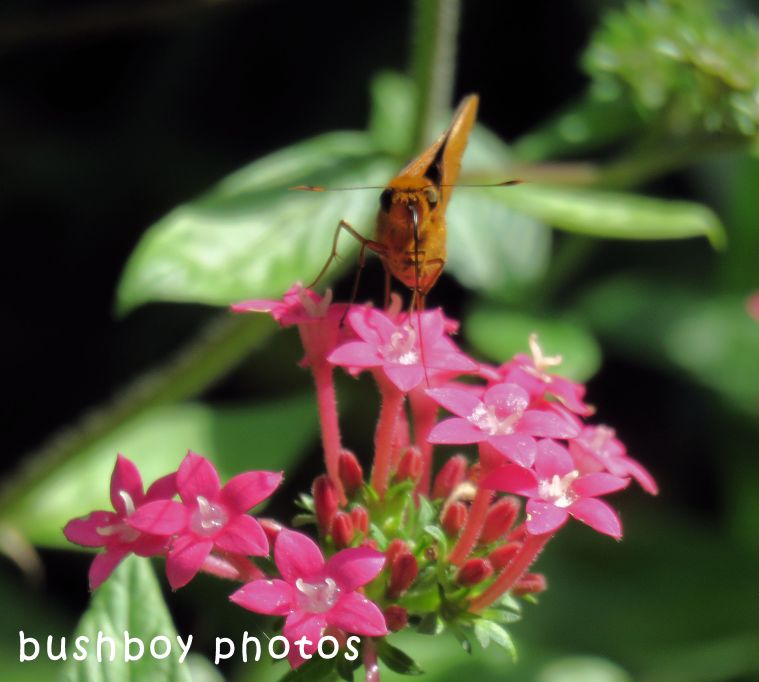 orange palm dart02_named_home_april 2018