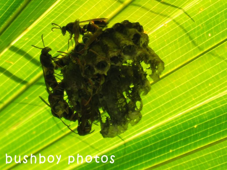 paper wasps_palm_named_home_april 2018