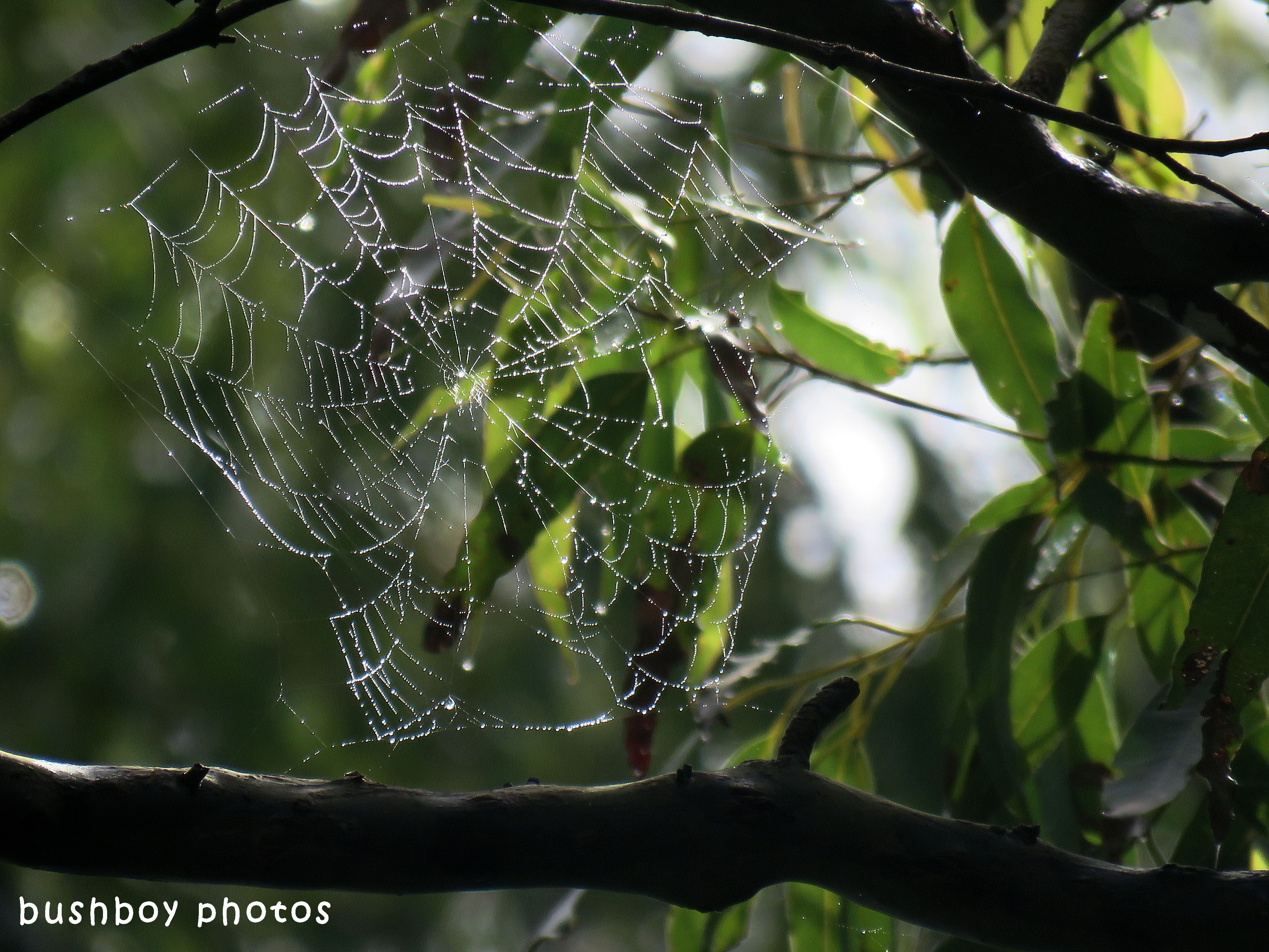 spiders web_messy_named_binna burra_april 2018