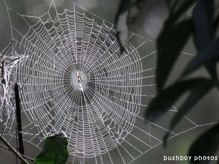 spiders web_named_binna burra_april 2018
