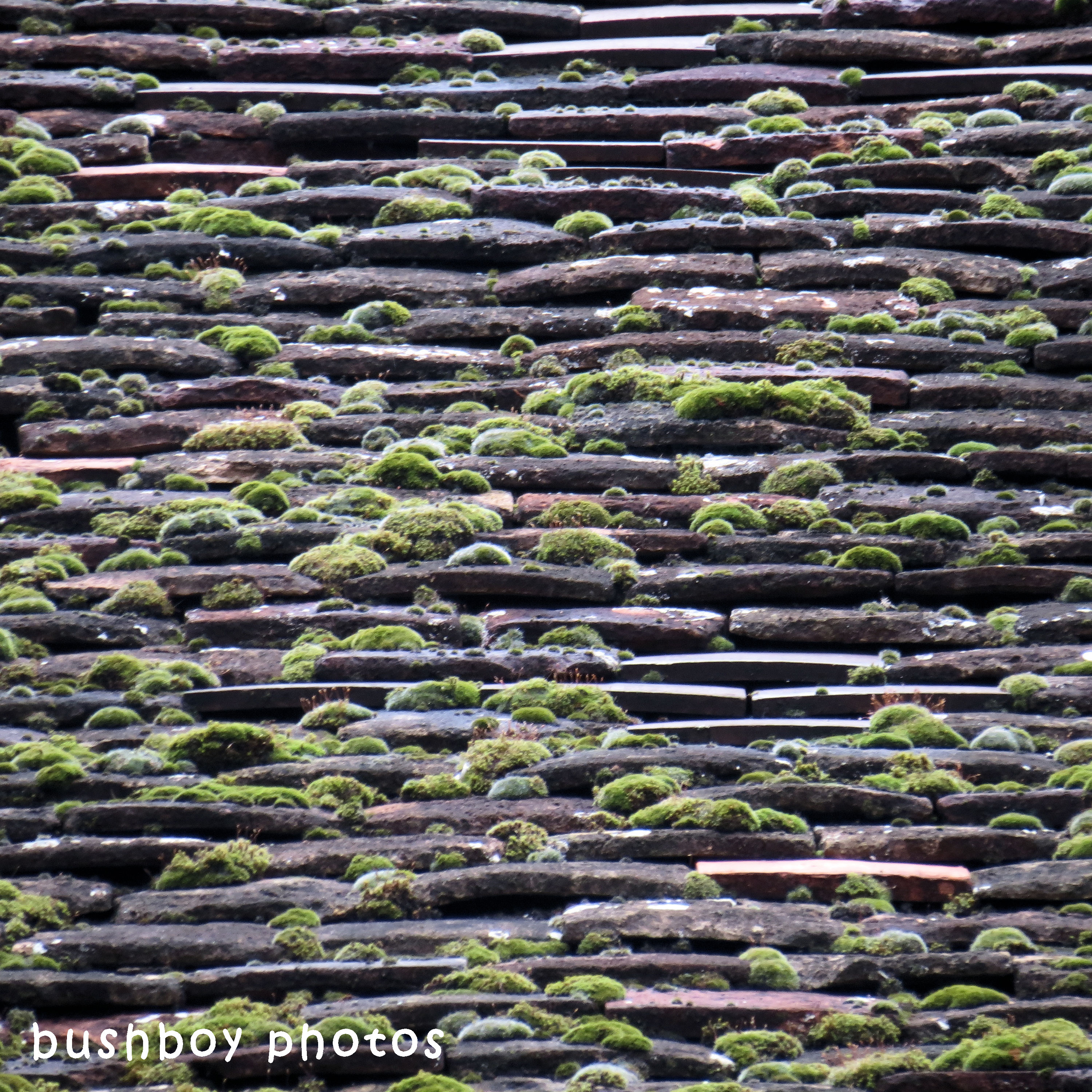 180614_square rooves_mossy roof_beaune_france