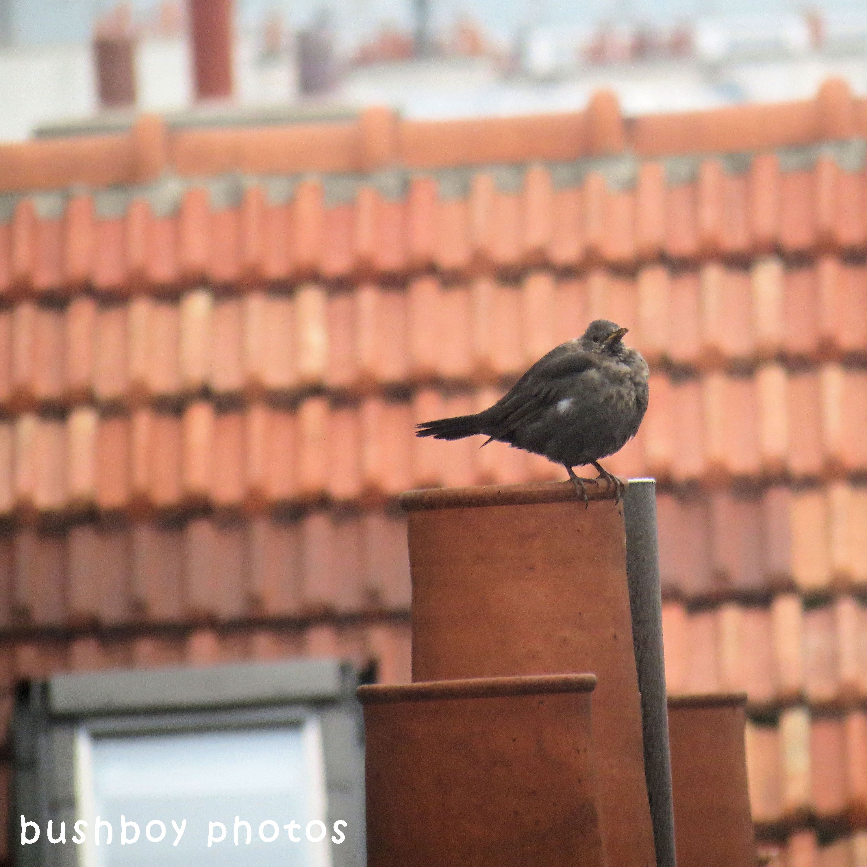 180616_square rooves_paris_bird