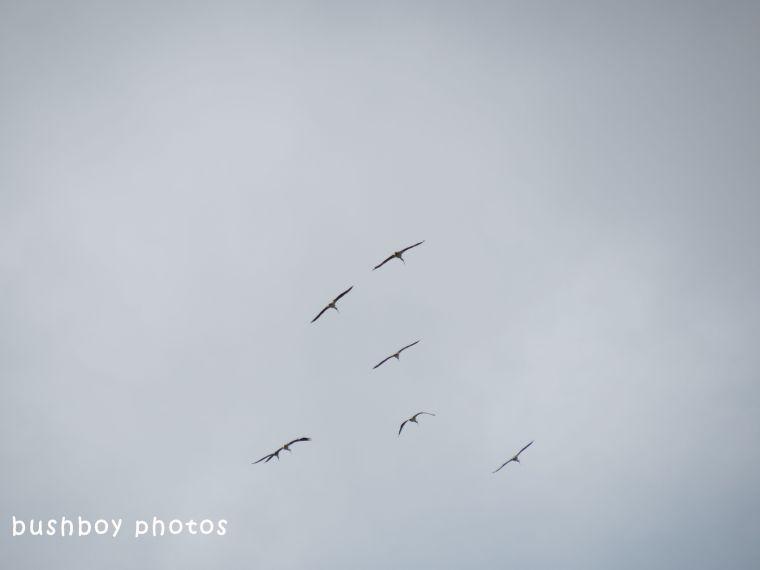 180628_blog challenge_diagonal_ibis