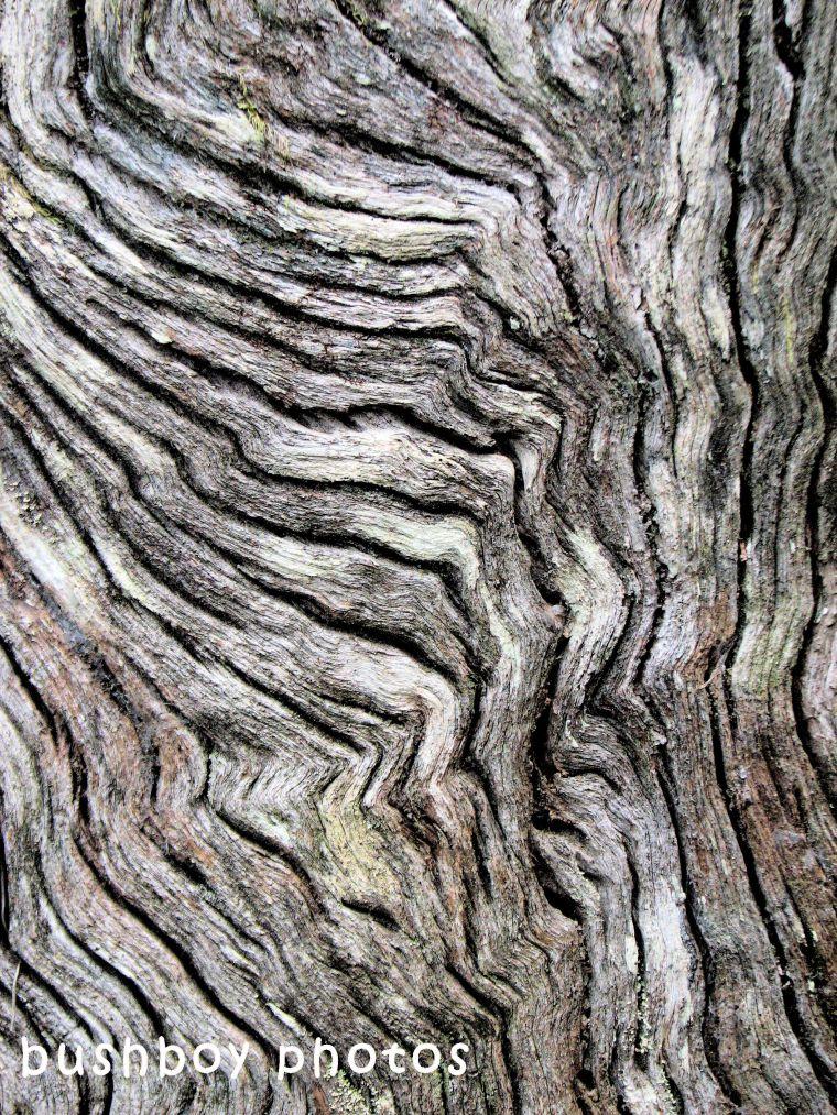 180628_blog challenge_diagonal_tree