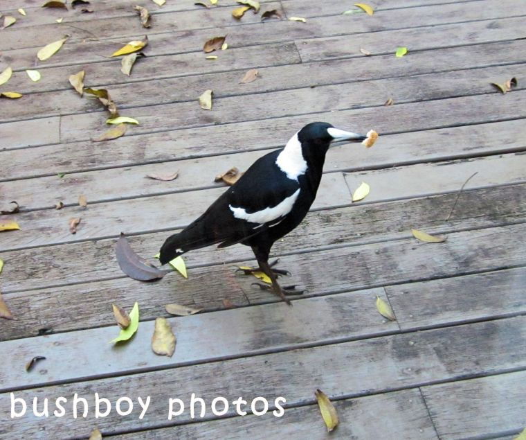 180629_blog challenge_black and white_birds_magpie