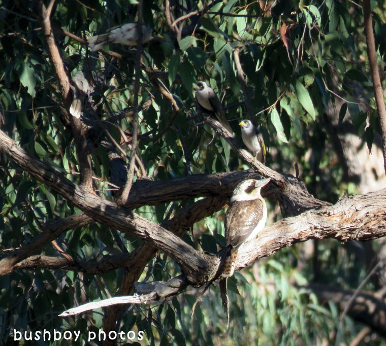 kookaburra_noisey minors_named_home_june 2018