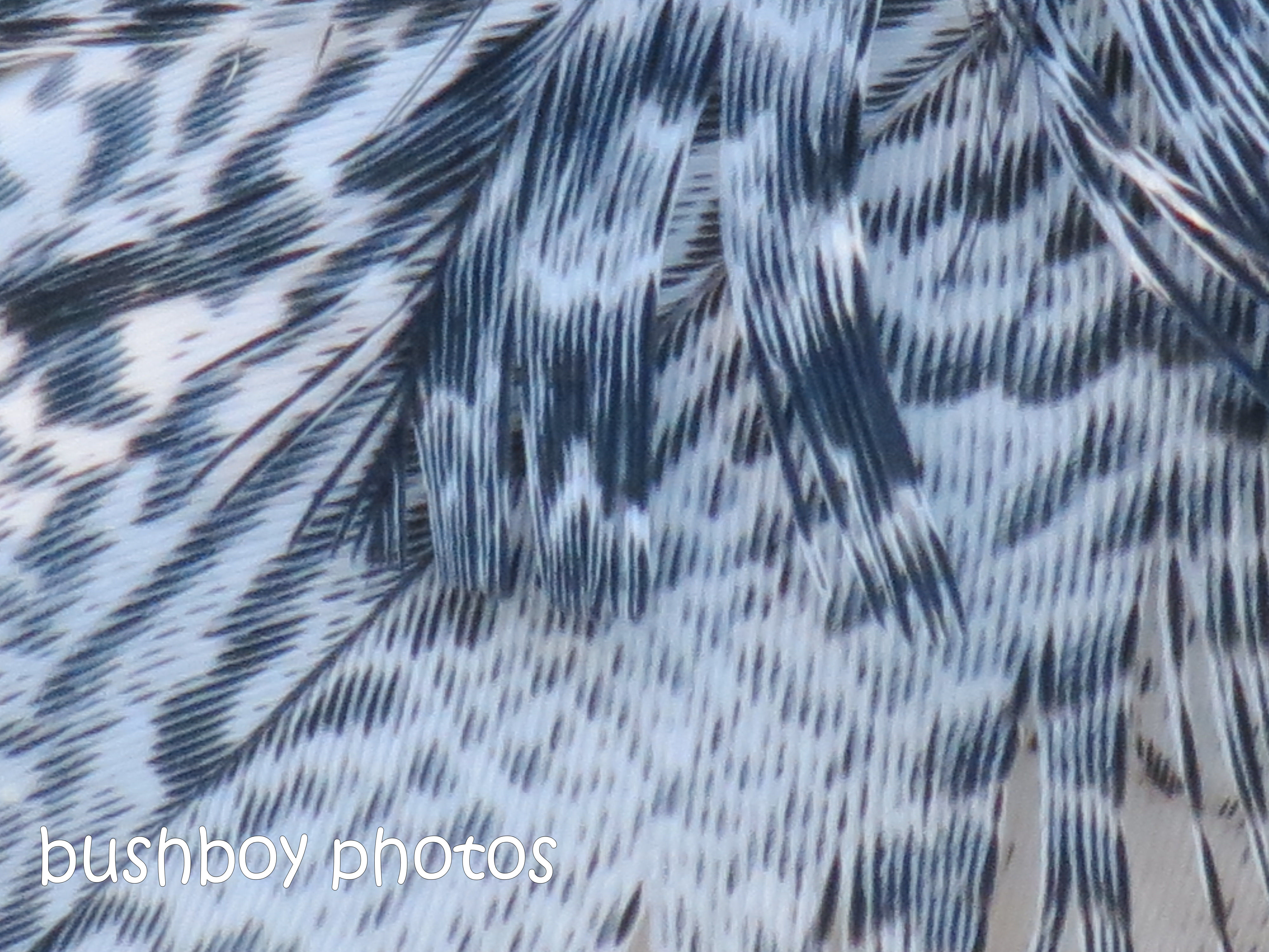 180812_patterns_ibis feathers