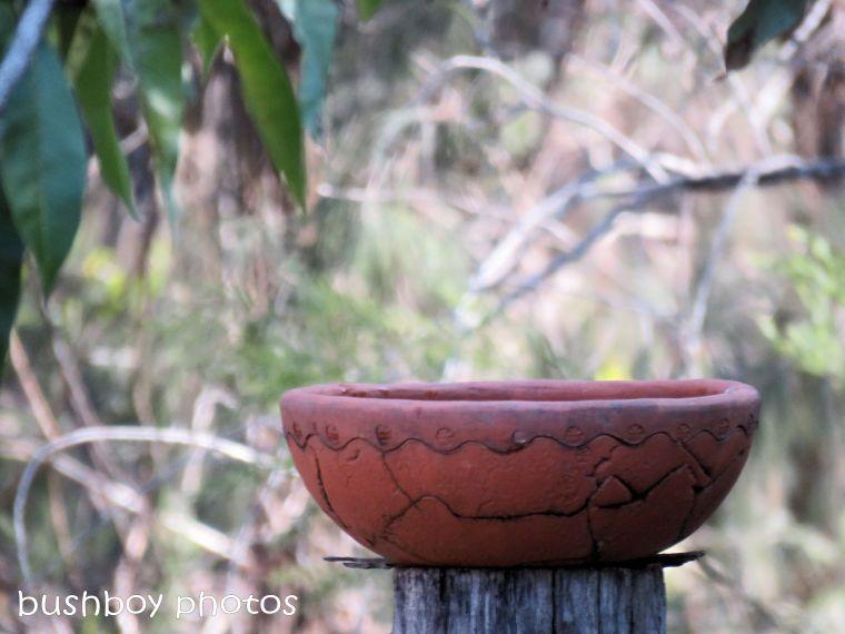 180822_blog challenge_scene_birdbath1_king parrots