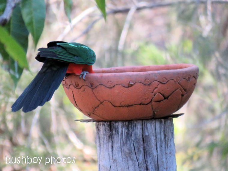 180822_blog challenge_scene_birdbath2_king parrots