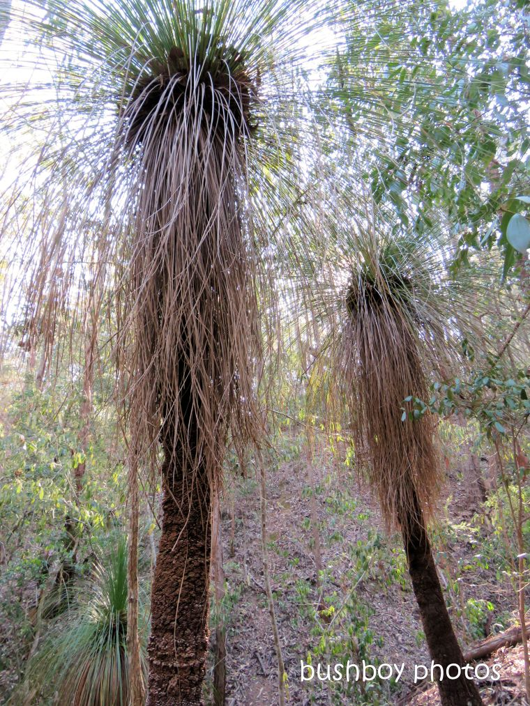 180828_blog challenge_water_grass trees_home_august 2018