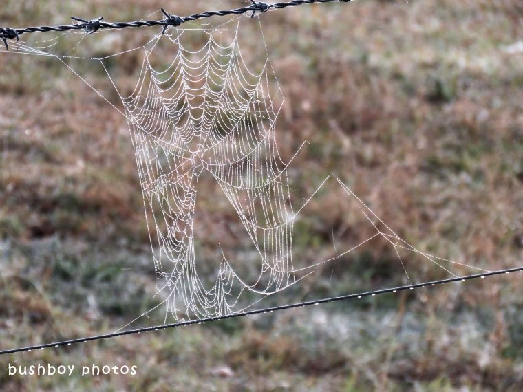 spiders web heart_named_caniaba_july 2018