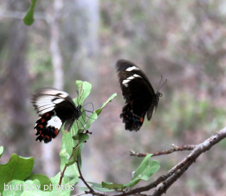 180903_blog challenge_departing_orchard butterflies