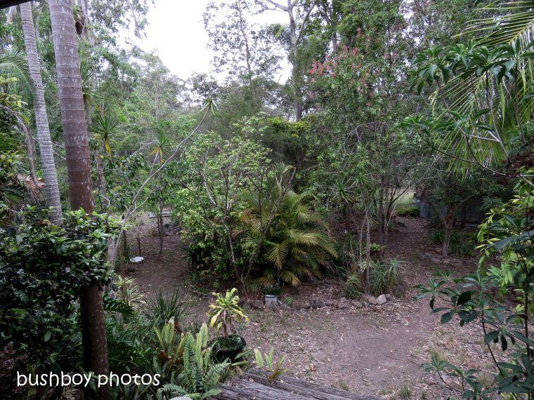 180905_blog challenge_backyard_durranbah_garden