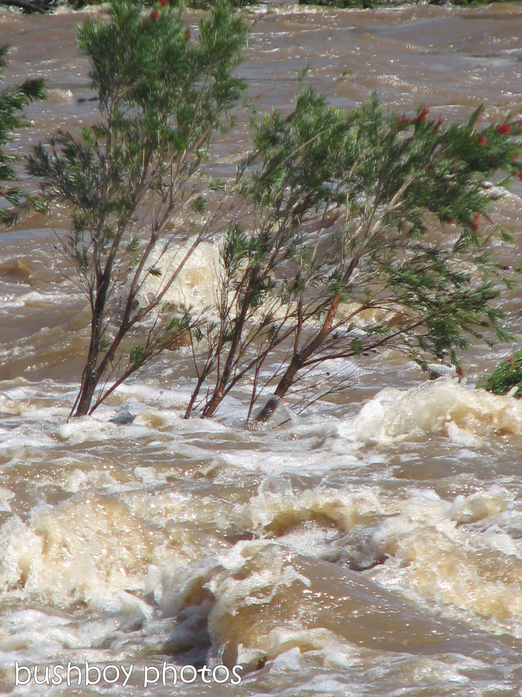 180914_blog challenge_water_clarence river_lilydale