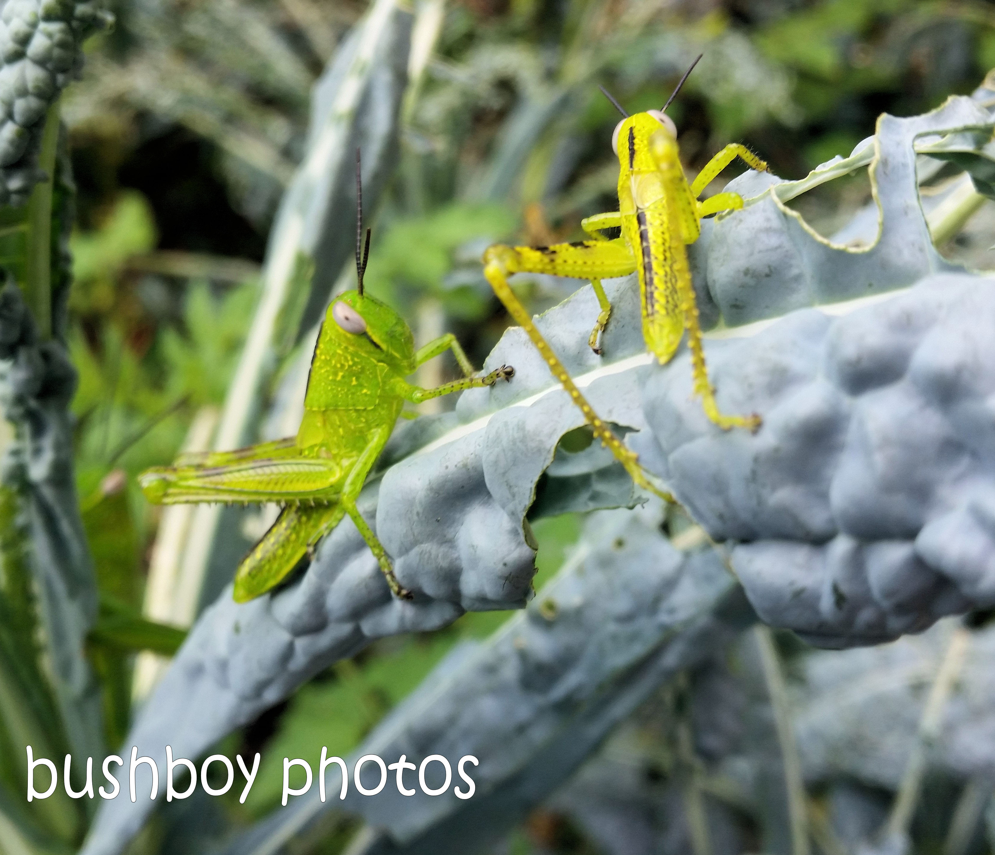 180920_blog challenge_starts with g_grasshoppers
