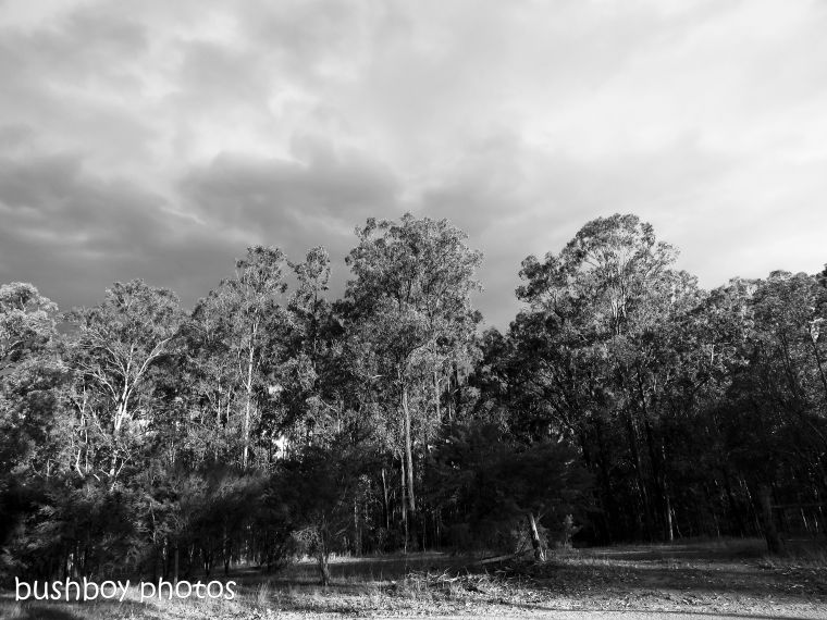 180921_blog challenge_blackandwhite_trees_home