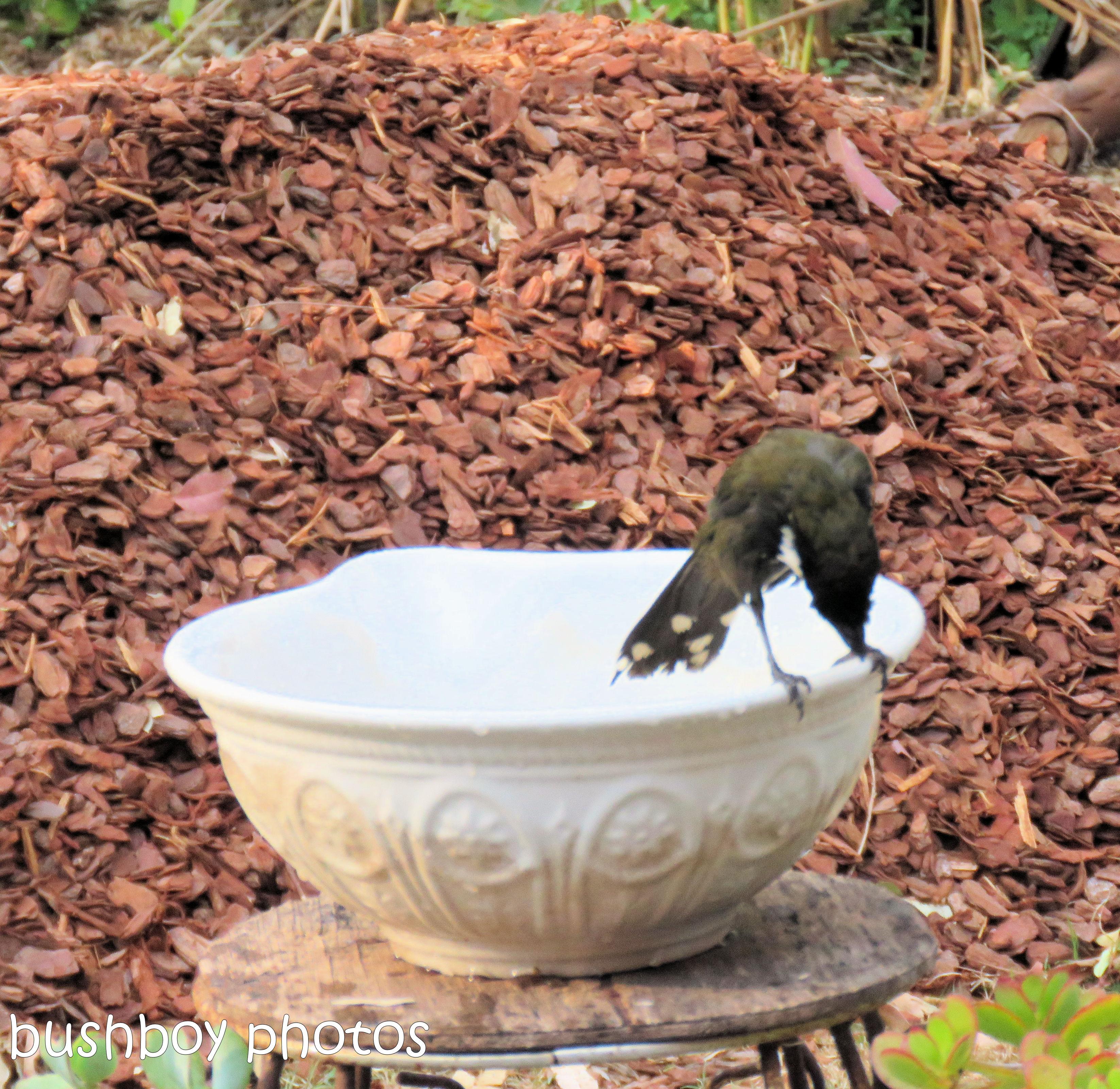 180921_blog challenge_whip bird_bird bath03