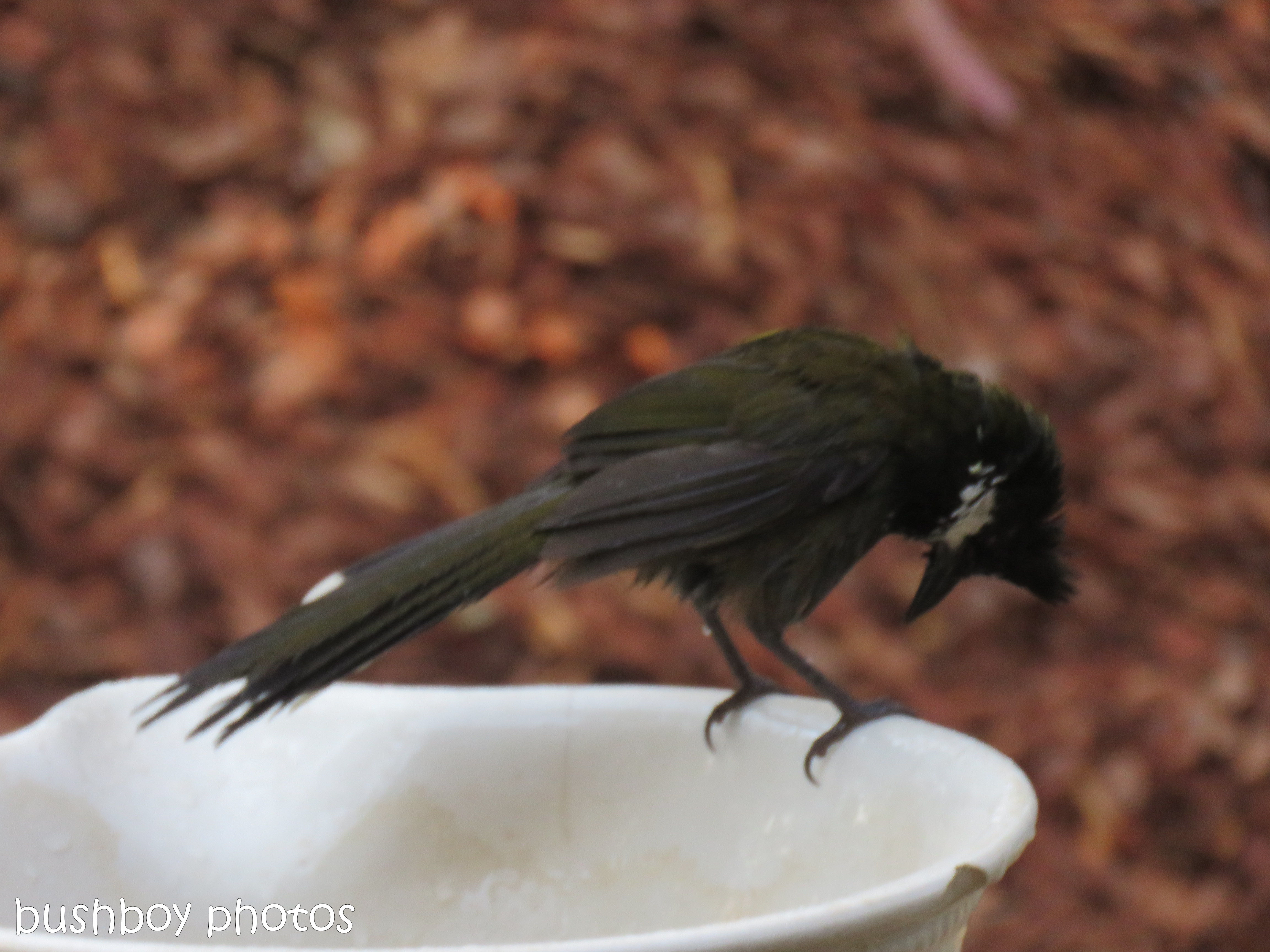 180921_blog challenge_whip bird_bird bath05
