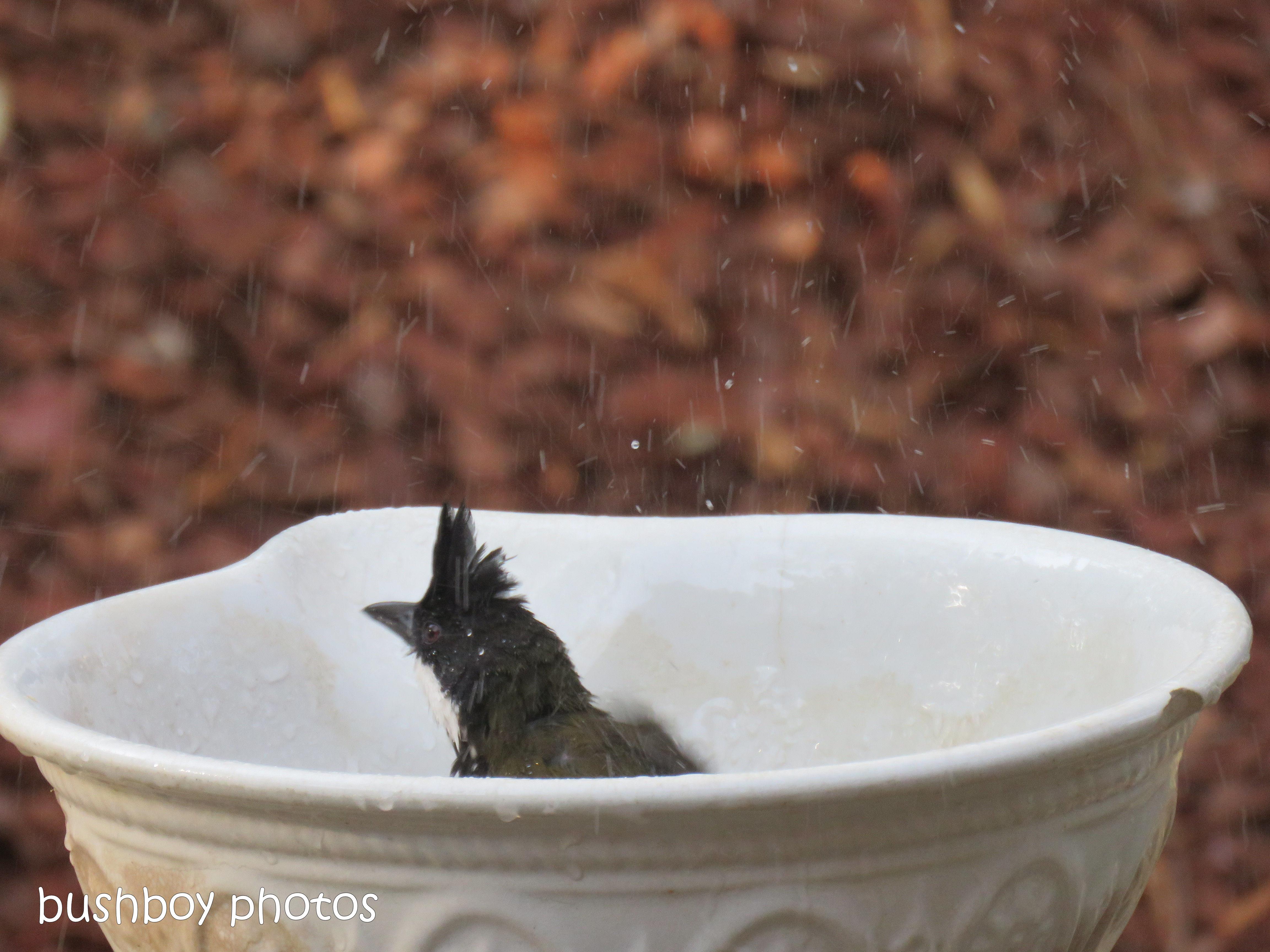180921_blog challenge_whip bird_bird bath07