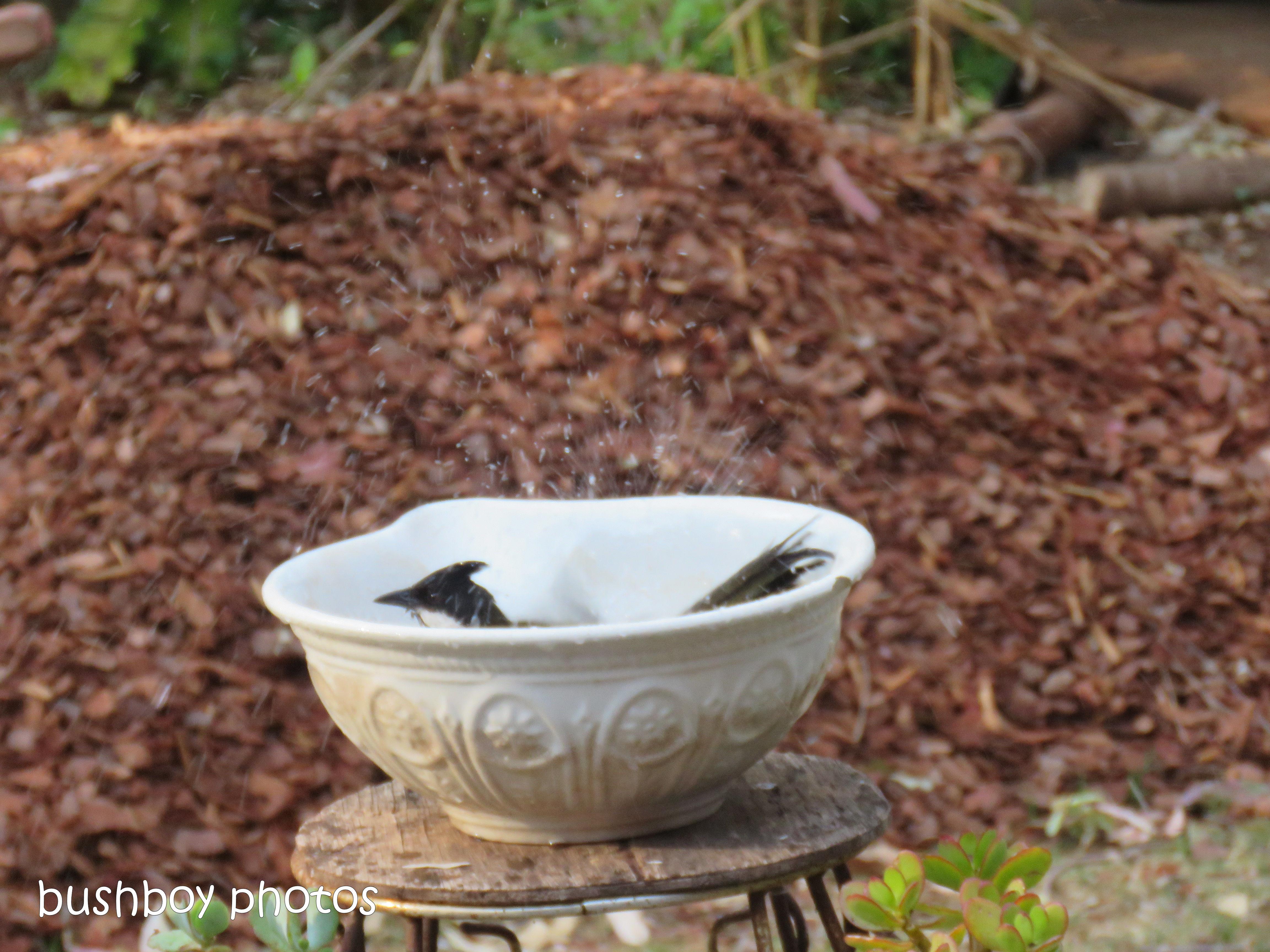 180921_blog challenge_whip bird_bird bath08
