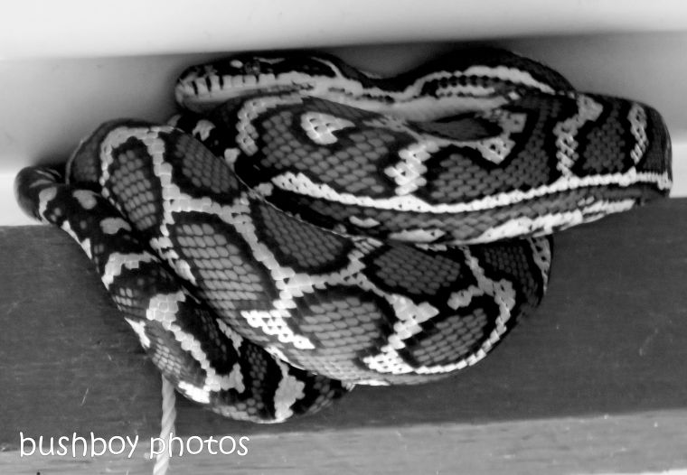 180928_blog challenge_blackandwhite_circles_curves_carpet snake