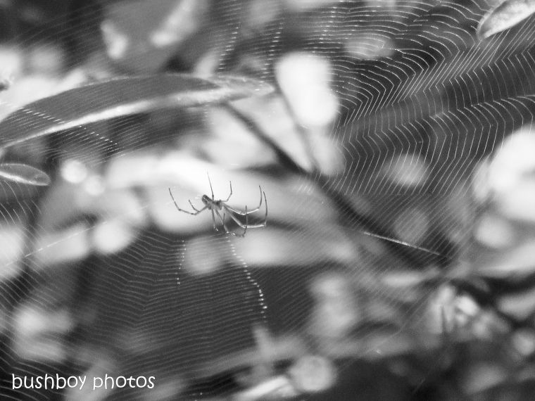 180928_blog challenge_blackandwhite_circles_curves_spiders web