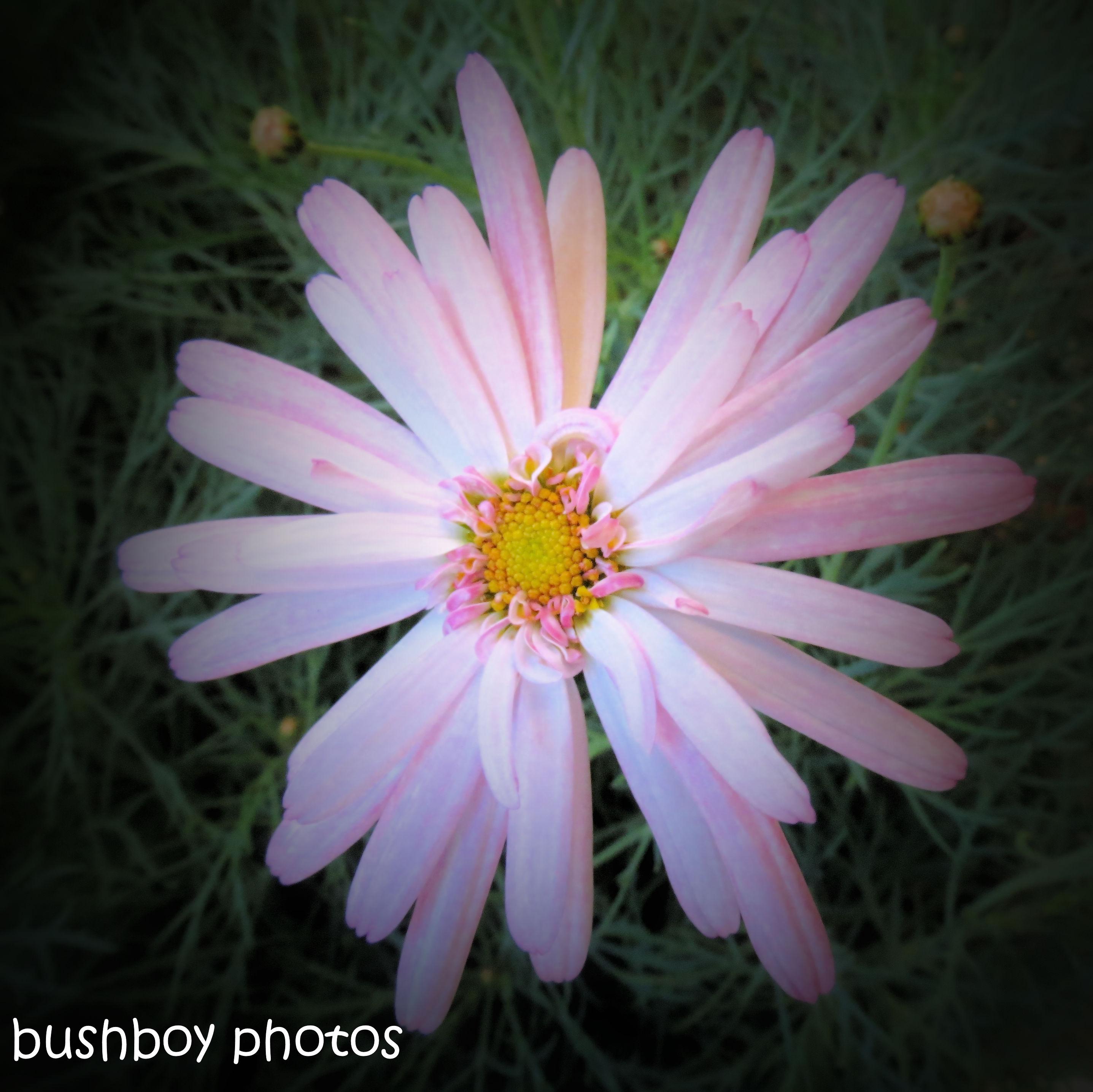 180930_blog challenge_pink square_flower1
