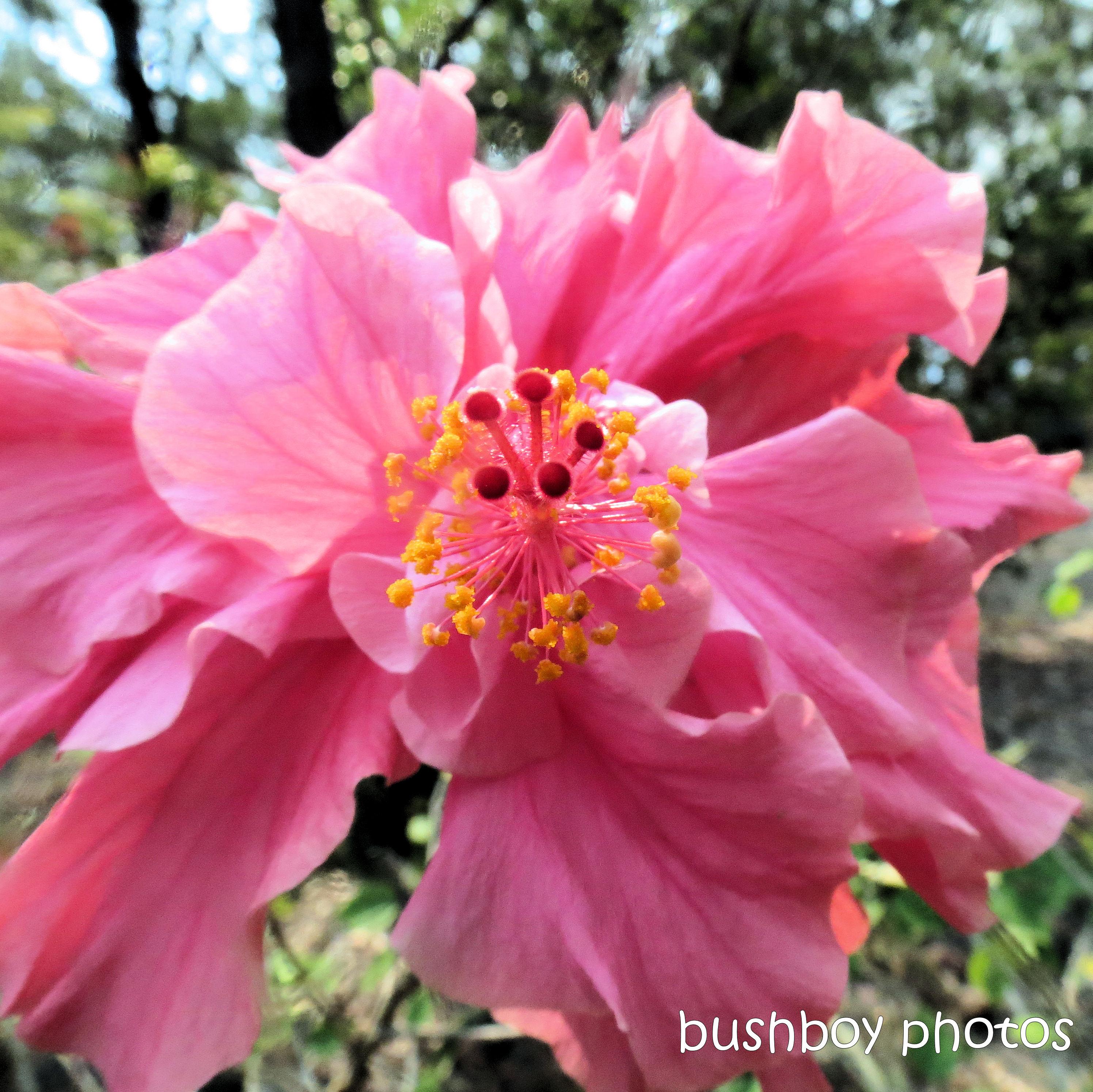 180930_blog challenge_pink square_hibiscus_flower