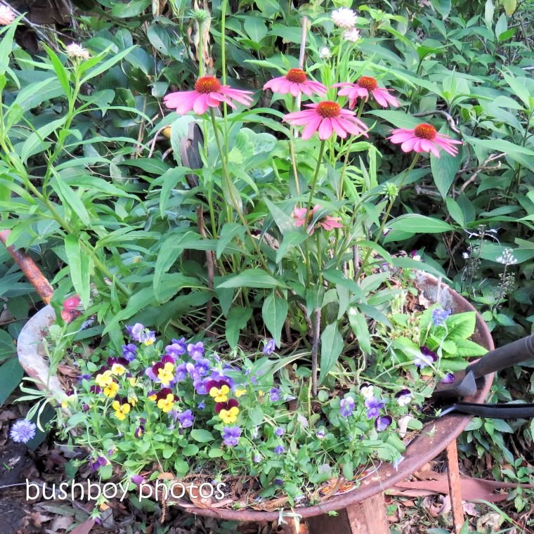 180930_blog challenge_pink square_wheelbarrow_flower