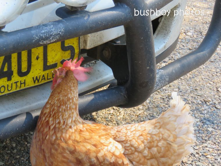 chook_car_named_home_aug 2018