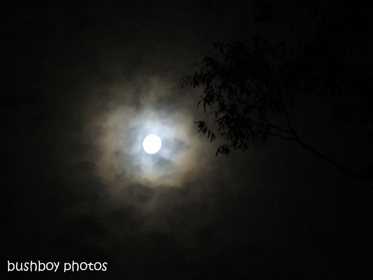 181016_blog challenge_ring_moon